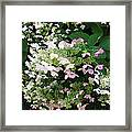 Flower Spray Framed Print