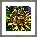 Flower - Sultry Dahlia - Luther Fine Art Framed Print