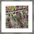 Flower Wall Along The Arno River- Florence Italy Framed Print