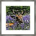 Flowerbed Framed Print by Heike Ward