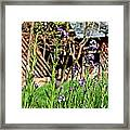Flowers And Barn Framed Print