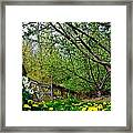 Flowers And Fence Framed Print
