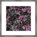 Flowers Dallas Arboretum V16 Framed Print