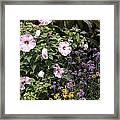 Flowers In A Garden Framed Print