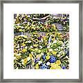 Flowers in Brugge Framed Print
