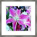 Flowerz2 Framed Print
