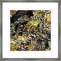 Flowing Gold Framed Print