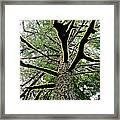 Fluorescent Moss Framed Print