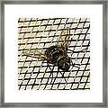 Fly From The Series The Imprint Of Man In Nature Framed Print
