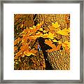 Focus On Yellow Framed Print