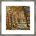 Follow The Yellow Brick Rd Framed Print