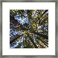 Forest Canopy Framed Print