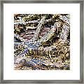 Forest Fingers Framed Print