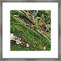 Forest Floor Fungi And Moss Framed Print