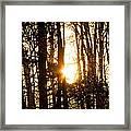 Forest Flurry Lightscape  Framed Print