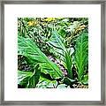 Forest Foliage Framed Print