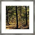 Forest Hike Framed Print