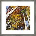 Forest In Autumn Bavaria Framed Print