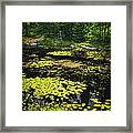 Forest Lake With Lily Pads Framed Print