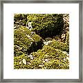 Forest Moss Framed Print