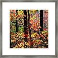 Color The Forest Framed Print