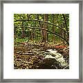 Forest River Framed Print