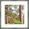 Forest Walk 16 Framed Print