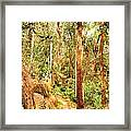 Forest Walk 7 Framed Print