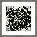 Fossil Framed Print