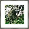 Fox 2 Framed Print