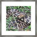 Fox Snake Framed Print