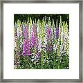 Foxglove Garden In Golden Gate Park Framed Print