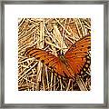 Fragile Wings Framed Print