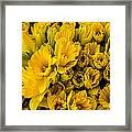 Fresh Daffodils  Framed Print