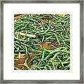 Fresh Green Beans In Baskets Framed Print