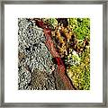 Fresh River Of Lave Framed Print
