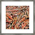 Freshly Catched Salmons At The Nenana River - Ak Framed Print