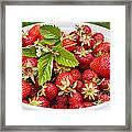 Freshly Picked Strawberries Framed Print