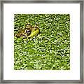 Frog In Duckweed Framed Print