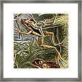 Frogs Detail Framed Print