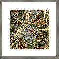 Frogs Frogs And More Frogs Framed Print