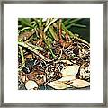 From The Earth Framed Print