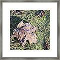 Frost Covered Leaf Framed Print