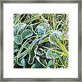 Frost On Strawberry Leaves Framed Print