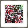 Frost On Wild Strawberry Framed Print