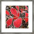 Frosted Blueberry Leaves Framed Print