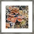 Frosted Cascading Mushrooms Framed Print