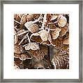 Frosted Hydrangea Framed Print