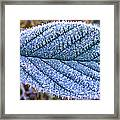 Frosty Leaf Framed Print