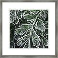 Frosty Leaves Macro Framed Print
